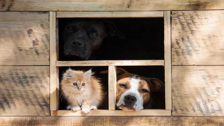Cuccia riscaldata per cane e gatto (Foto Adobe Stock)