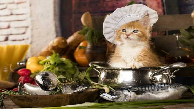 ricette gatti zuppe