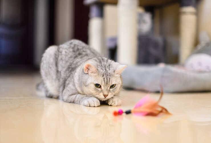 razze gatti non tollerano cani