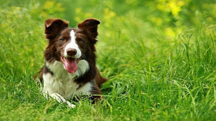 Localizzatori GPS cani
