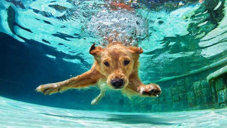 Il cane può trattenere il respiro? (Foto Adobe Stock)