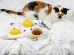 tisane per gatto