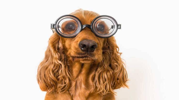 come capire cane non vede