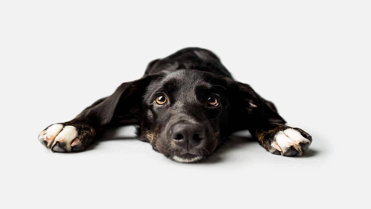 cane può avere dipendenze