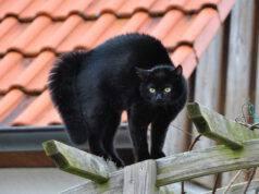 perché gatto inarca schiena