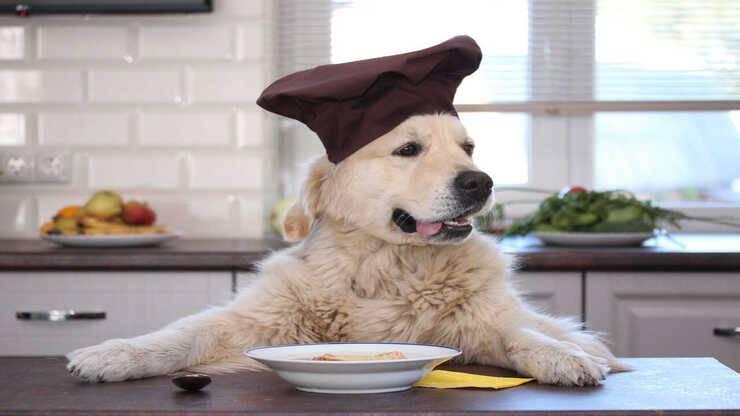 zuppe per cani ingredienti ricette