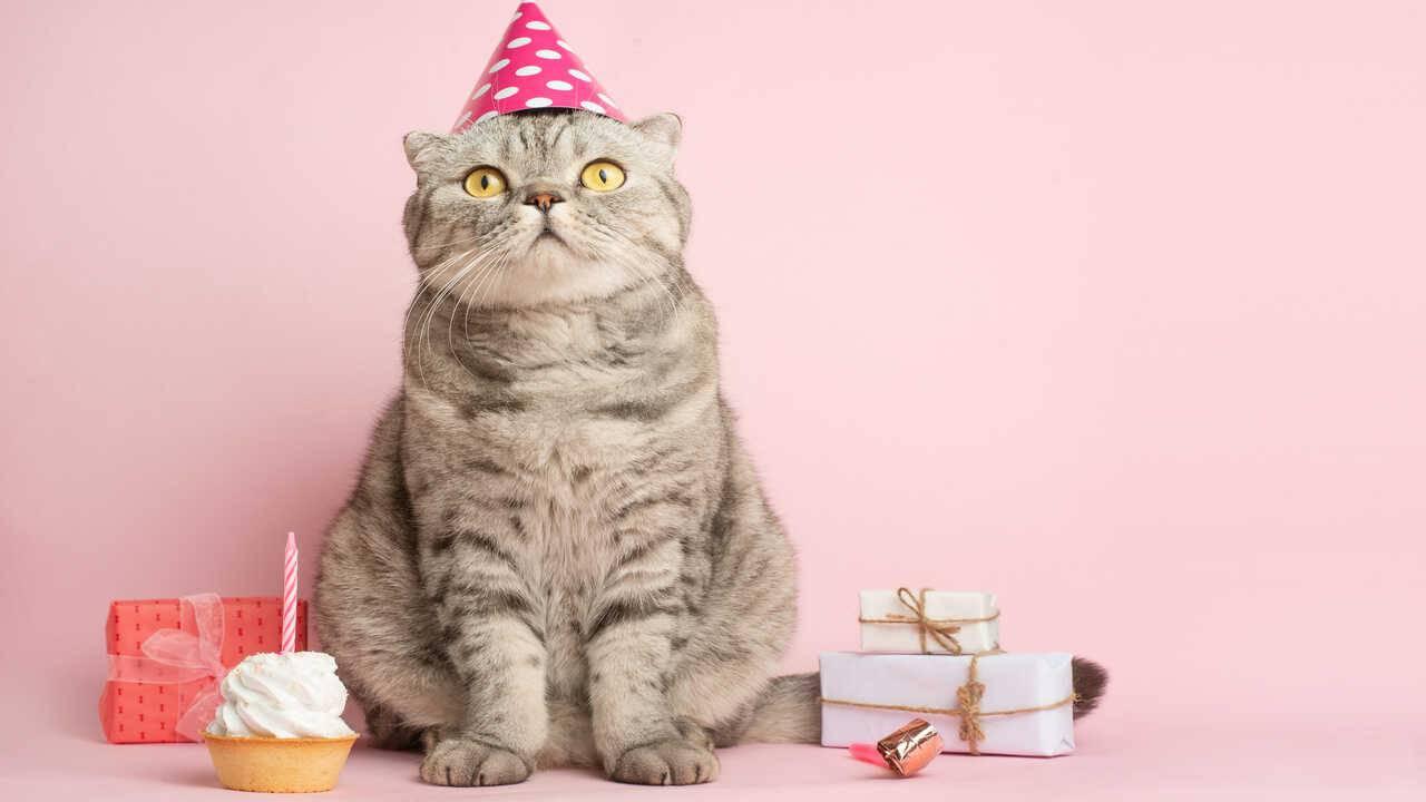torta compleanno gatto ricette