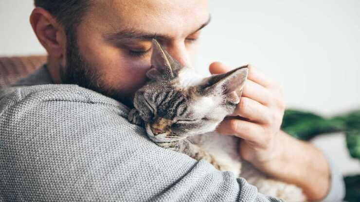 Tumore all'intestino nel gatto (Foto Adobe Stock)