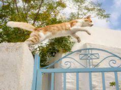Recuperare il gatto nella proprietà del vicino (Foto Adobe Stock)