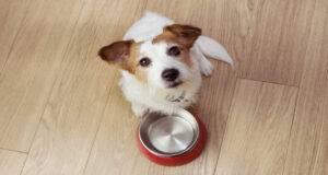 cane può mangiare semi di lino