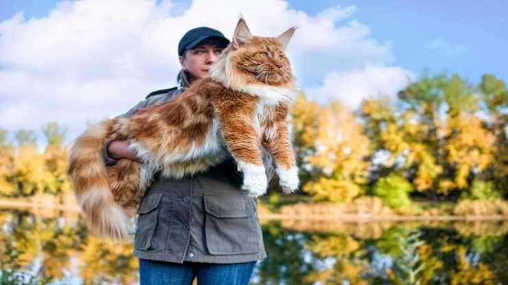 razze gatti grandi mondo