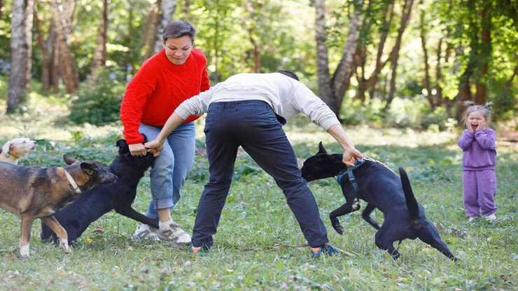 Cane morde altro cane (Foto Adobe Stock)