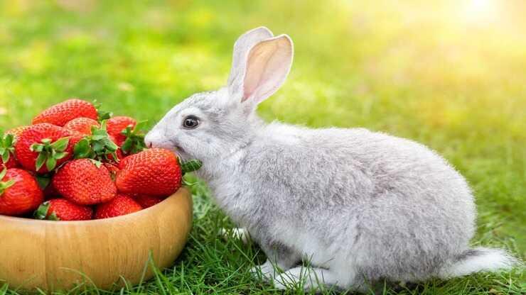 coniglio può mangiare frutta