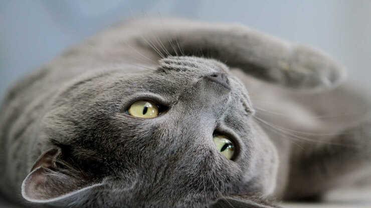 gatto viziato