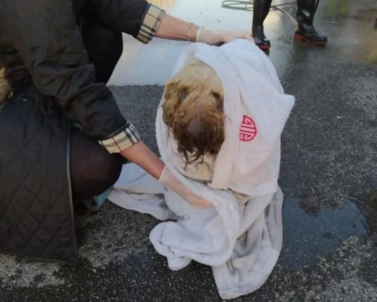 cane caduto fossa biologica
