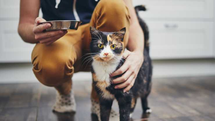 alimentazione per gatti diabetici