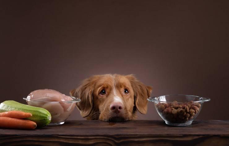alimenti per il cane