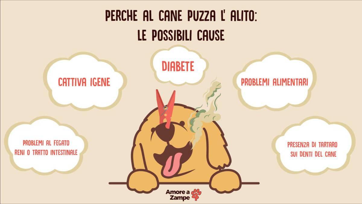 infografica alito cattivo cane alitosi