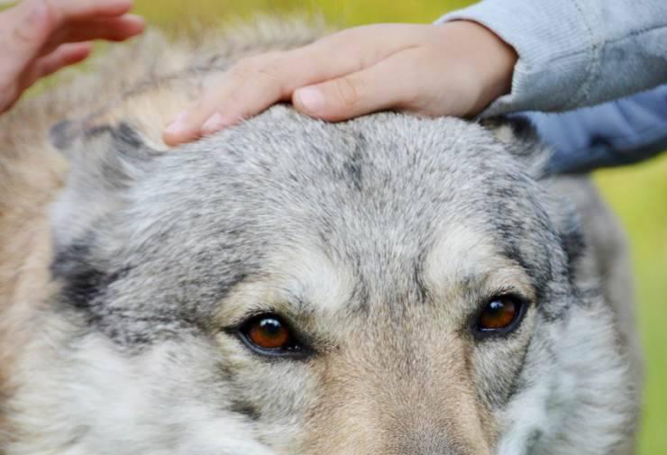 Carezze al cane (Foto Pixabay)