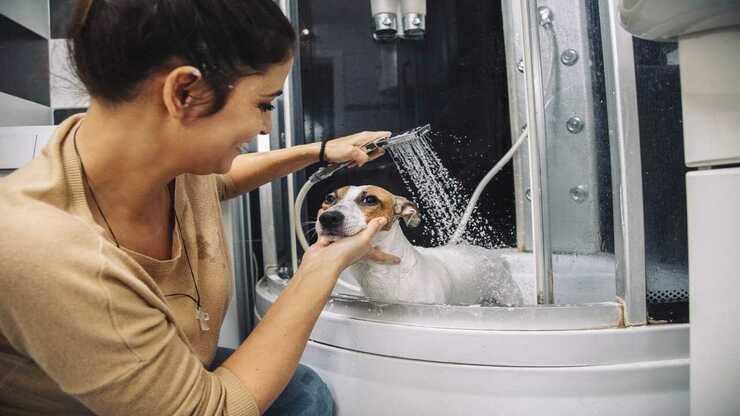 Lavatrice per cani (Foto Adobe Stock)