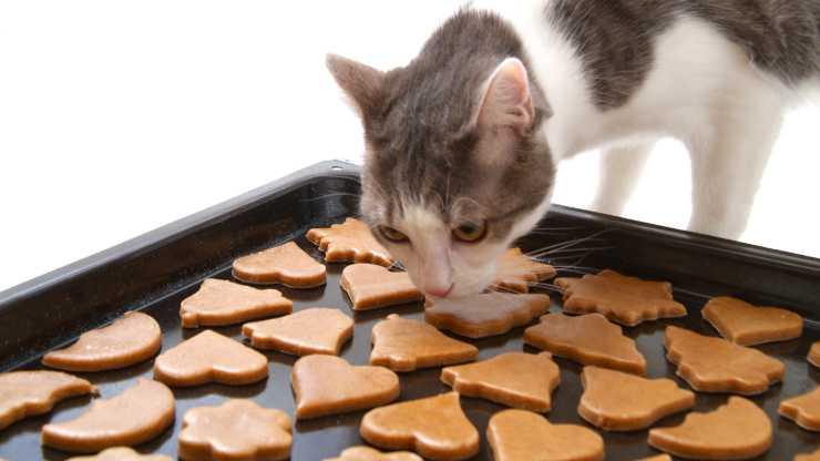 biscotti alla zucca per gatti