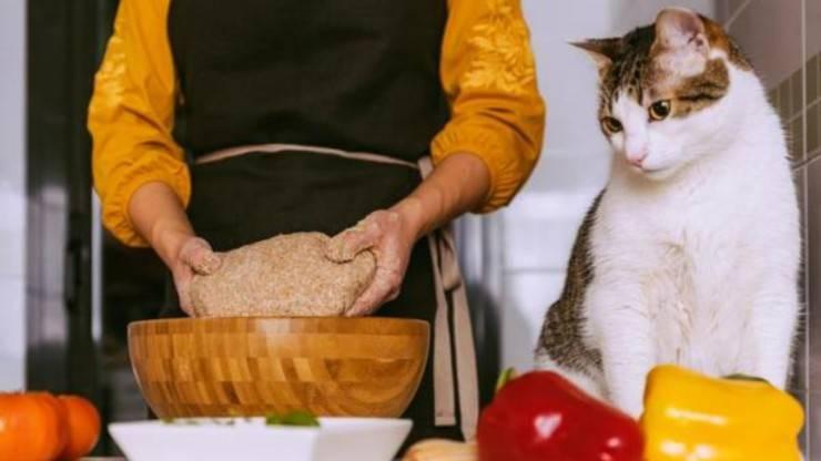 cucinare con gatto ricette biscotti