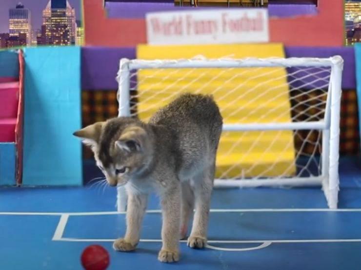 gattini giocano calcio