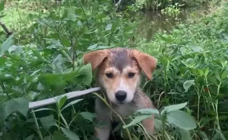 cane legato abbandonato