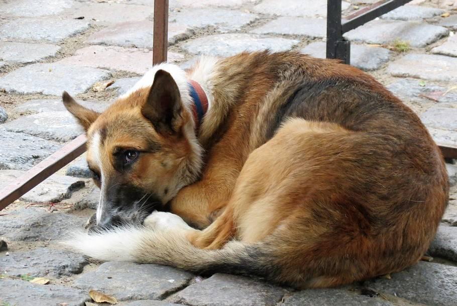 cane 25 chilometri famiglia