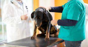 Le malattie gastrointestinali del cane (Foto Adobe Stock)