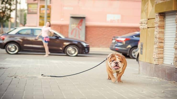 Dog sitter smarrisce cane (Foto Adobe Stock)