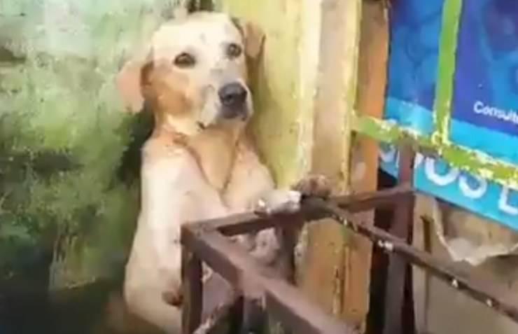 cane balcone alluvione