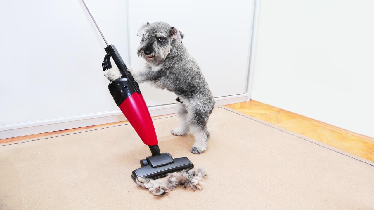 Aspirapolvere per animali (Foto Adobe Stock)