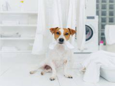 Asciugatrice per animali domestici (Foto Adobe Stock)