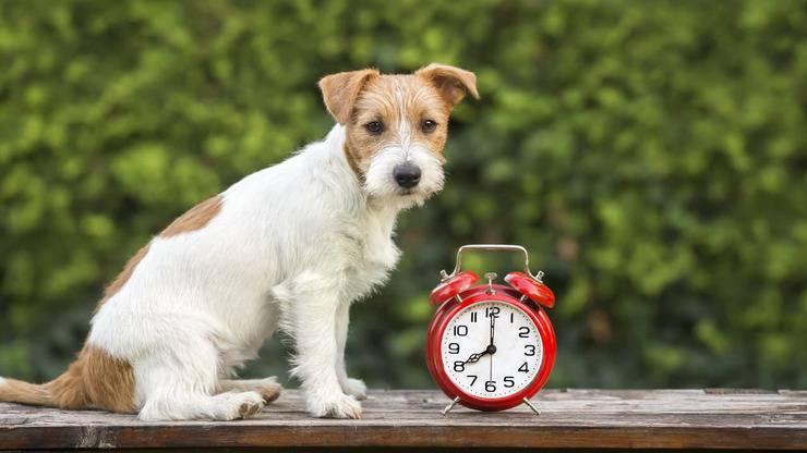Gli orari in cui il cane può abbaiare (Foto Adobe Stock)