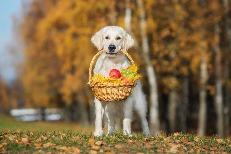 cane mangia frutta