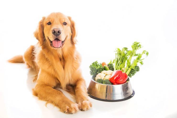 cane frutta verdura inverno