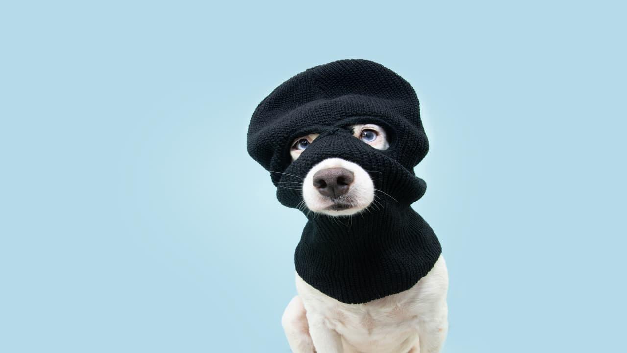 Il cane ruba gli oggetti del vicino (Foto Adobe Stock)