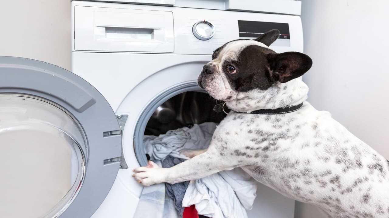 Gli elettrodomestici per chi ama gli animali (Foto Adobe Stock)