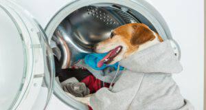 Cattura peli in lavatrice (Foto Adobe Stock)