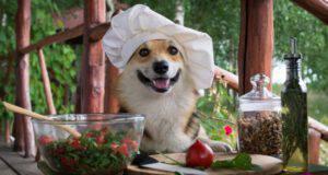 cane e verdura