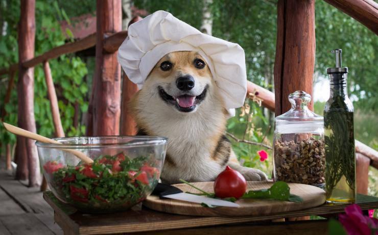 il cane può mangiare la rucola