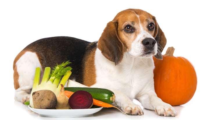 cane mangia verdura