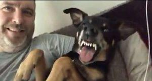 Il cane che odia i selfie