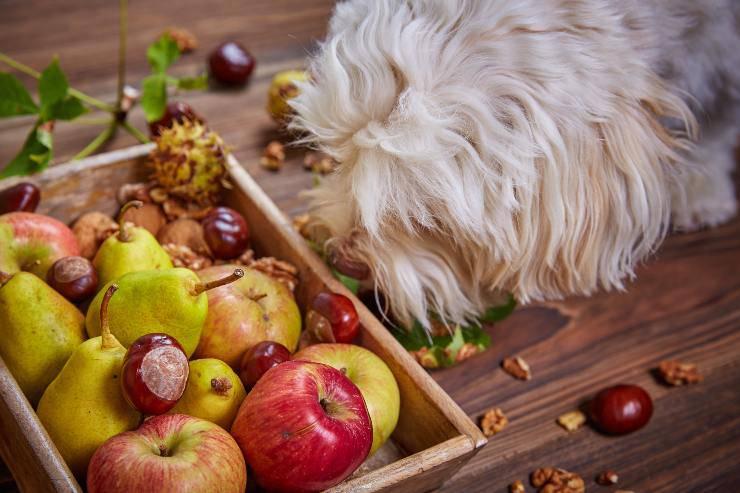 la frutta che può mangiare il cane