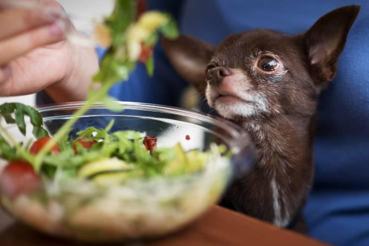 cane mangia rucola