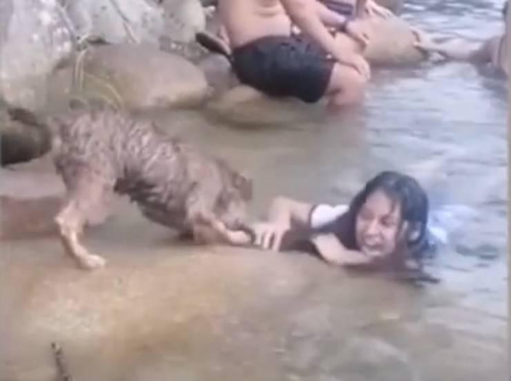 cane bagnino