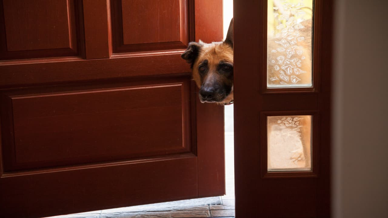 Come insegnare al cane a rimanere fuori dalla stanza (Foto Adobe Stock)