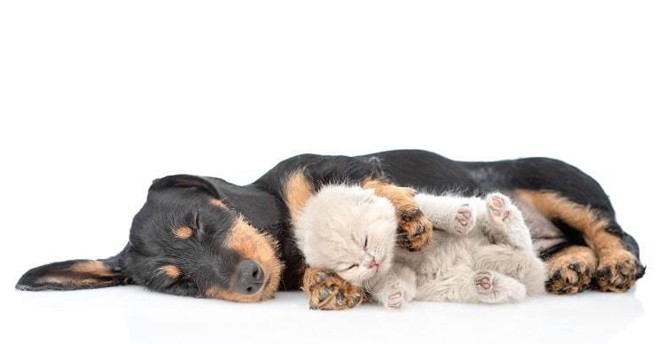cane gatto abbracciati