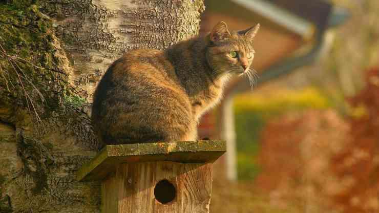 Il gatto incuriosito (Foto Pixabay)